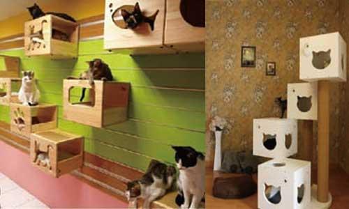 构思巧妙的宠物猫家具会给人和宠物猫留下深刻的印象,不但给人们的