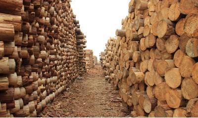 木材市场年底或迎小高峰 给家具企业何种启示?
