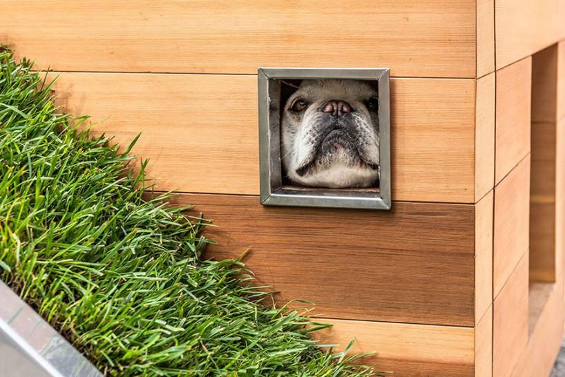 超现代环保的狗狗梦之屋
